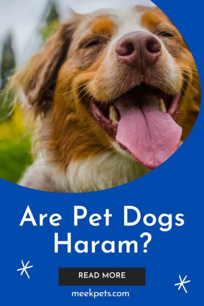 Are Pet Dogs Haram